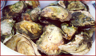 Falmouth Fish Market North Atlantic Oysters Shipped From