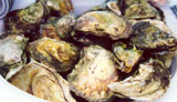 North Atlantic Oysters